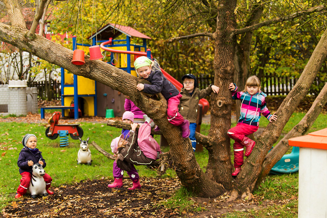 Haselmäuse klettern auf einen Baum